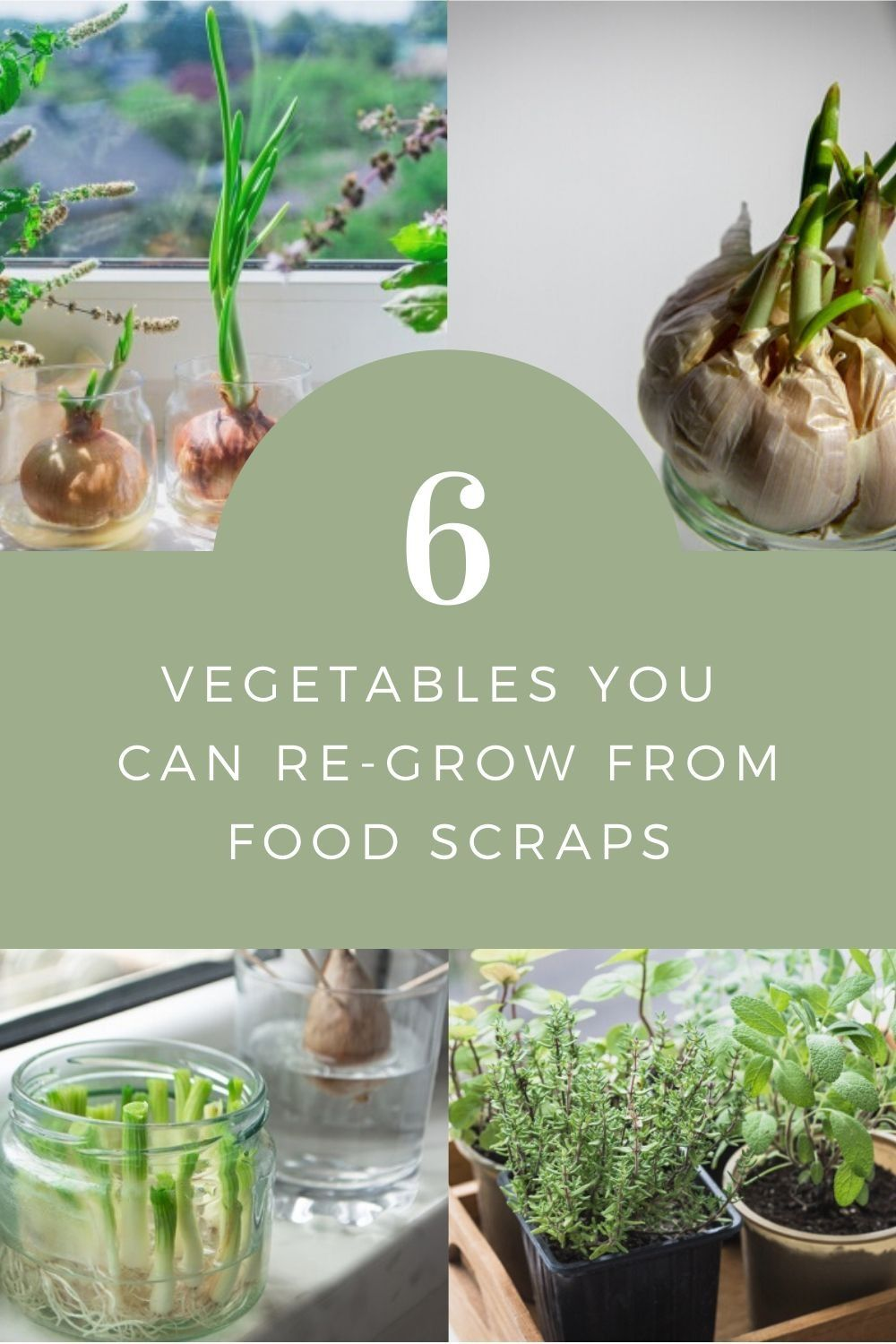 Full List of Plants You Can Regrow from Kitchen Scraps in 2020 | Plants you can regrow, Plants