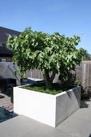 Boom In Pot.Boom In Pot Op Terras In 2019 Tuin Achtertuin Bomen En