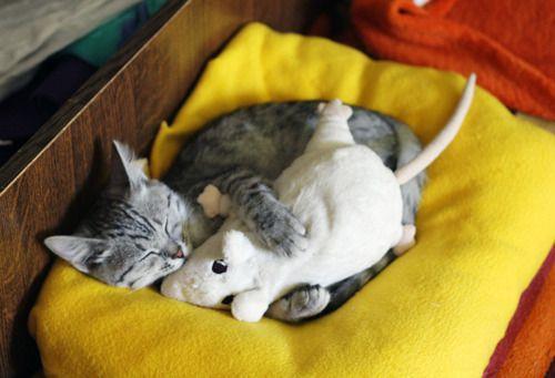 Ha ha ha....  A cats got to have what a cats got to have