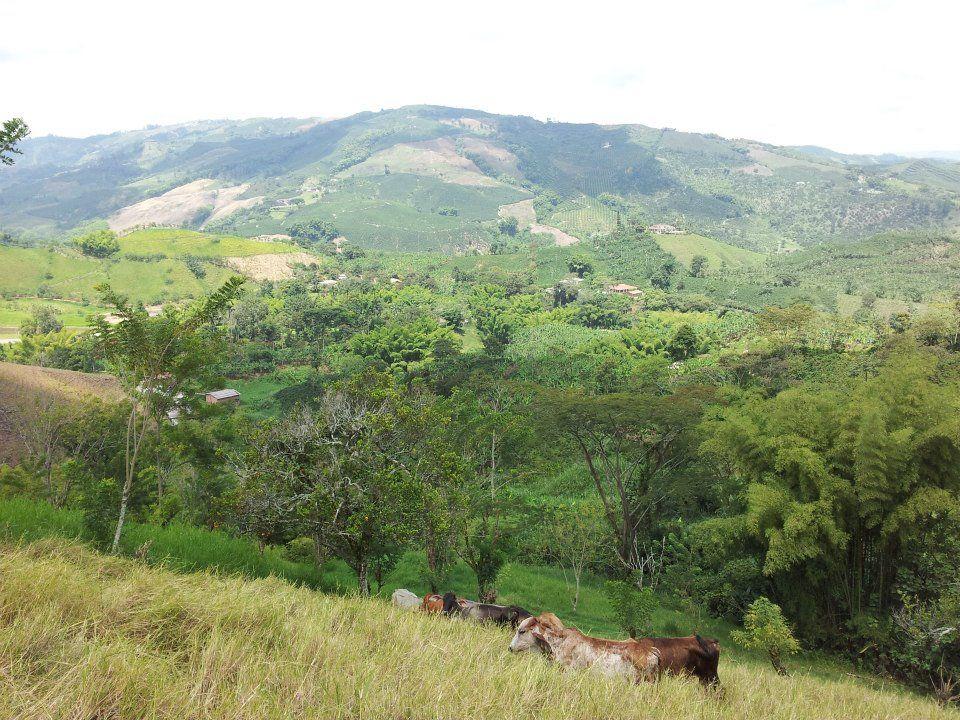 farms view 2