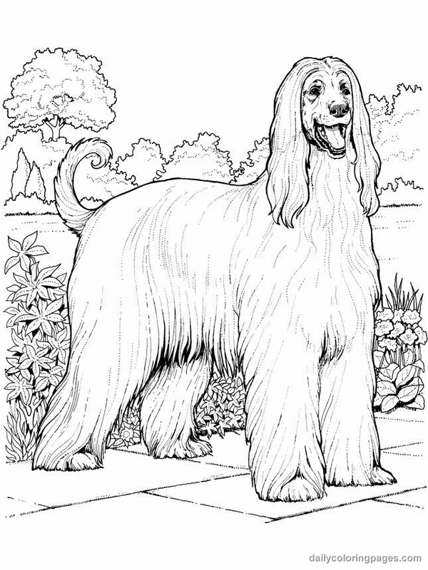 dog color pages printable afghan hound dog coloring pages 001