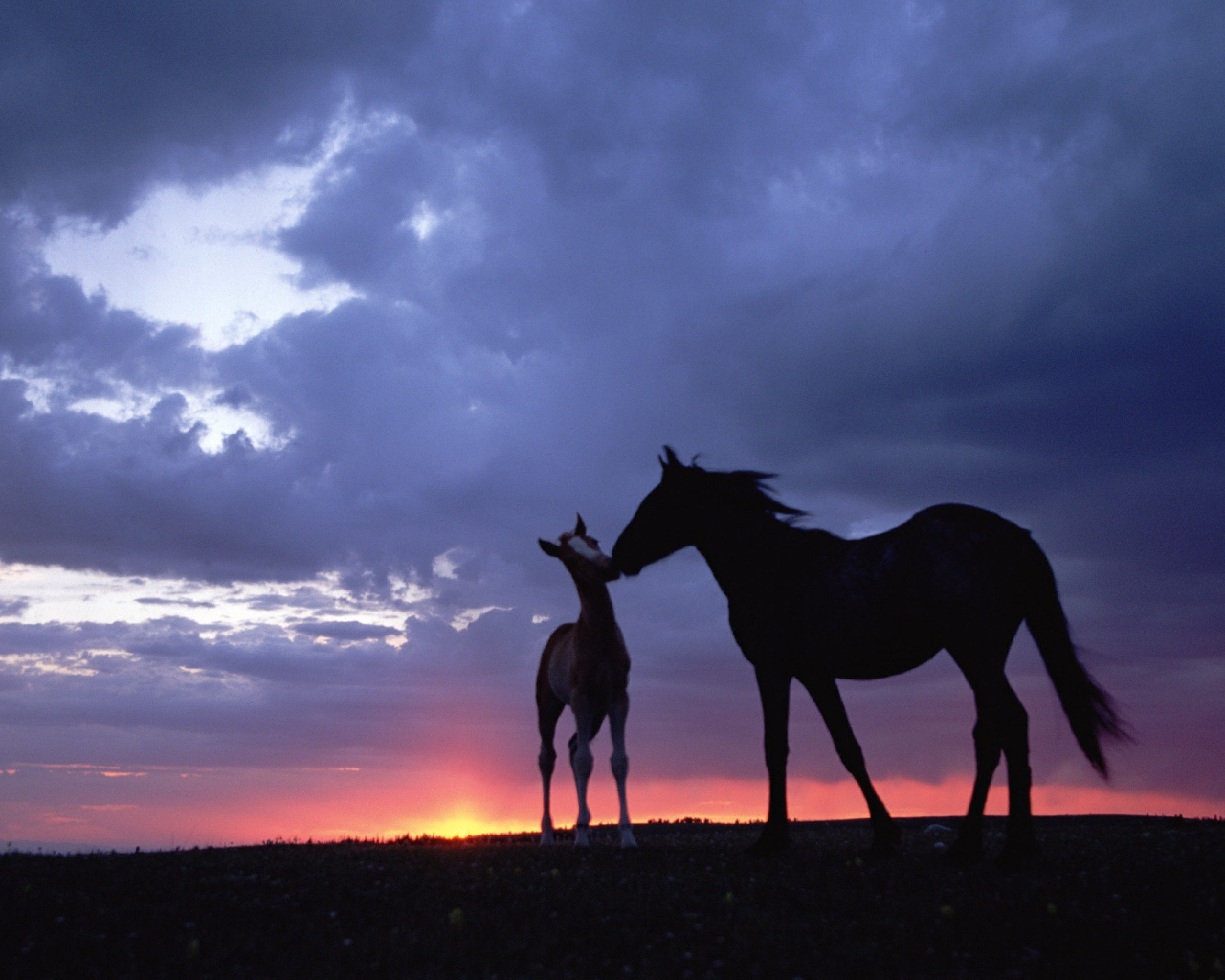 Animals Love Wallpaper Horses Pretty Horses Horse Love