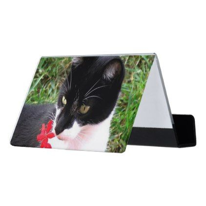 Awesome tuxedo cat in garden desk business card holder cat cats awesome tuxedo cat in garden desk business card holder cat cats kitten kitty pet love colourmoves Choice Image