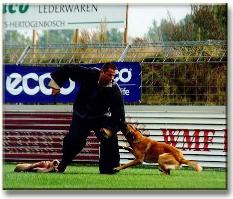 The Difference Between Schutzhund Knpv Dogs Leerburg Article
