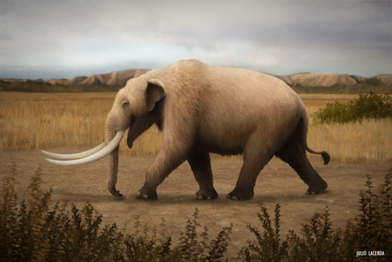 Columbian Mammoth At Quarternary Patagonia Safari