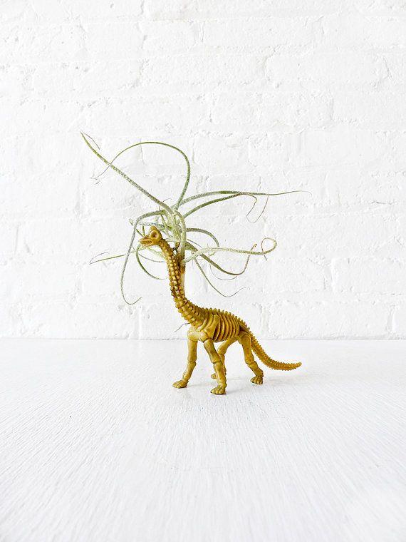 Mr Bones The Air Plant Vegetarian Dinosaur By Earthseawarrior 55 00 Kids Interior Design Quirky Decor Dinosaur Garden