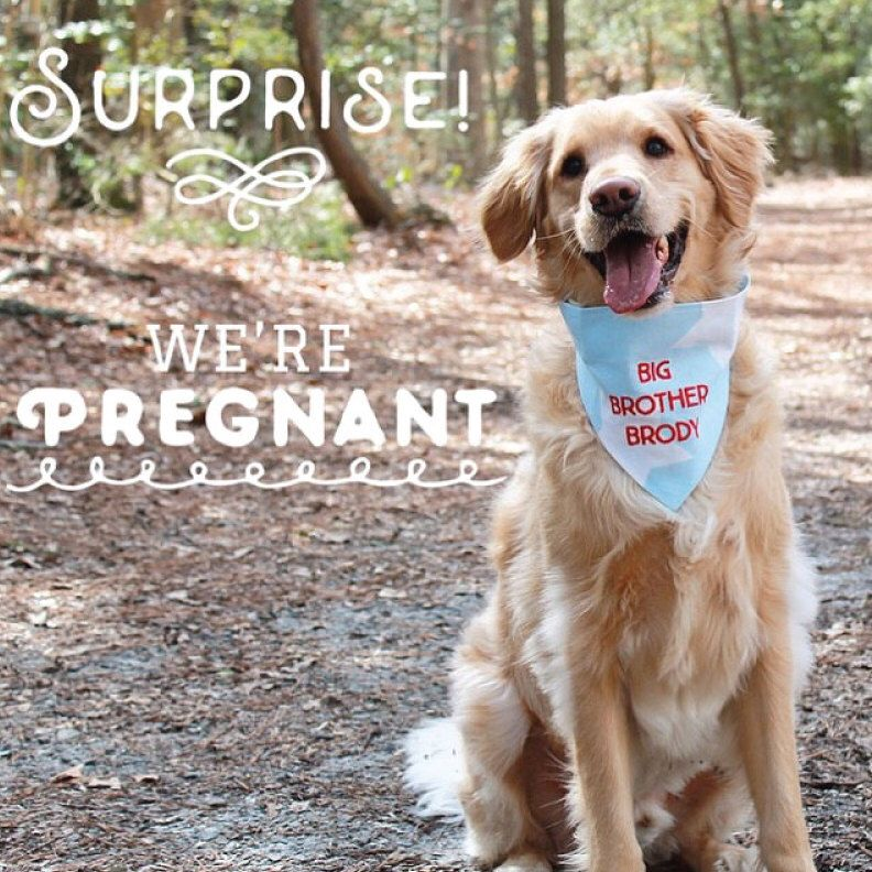 Pregnancy Announcement Idea Custom Dog Bandana Embroidered by – Custom Baby Announcements