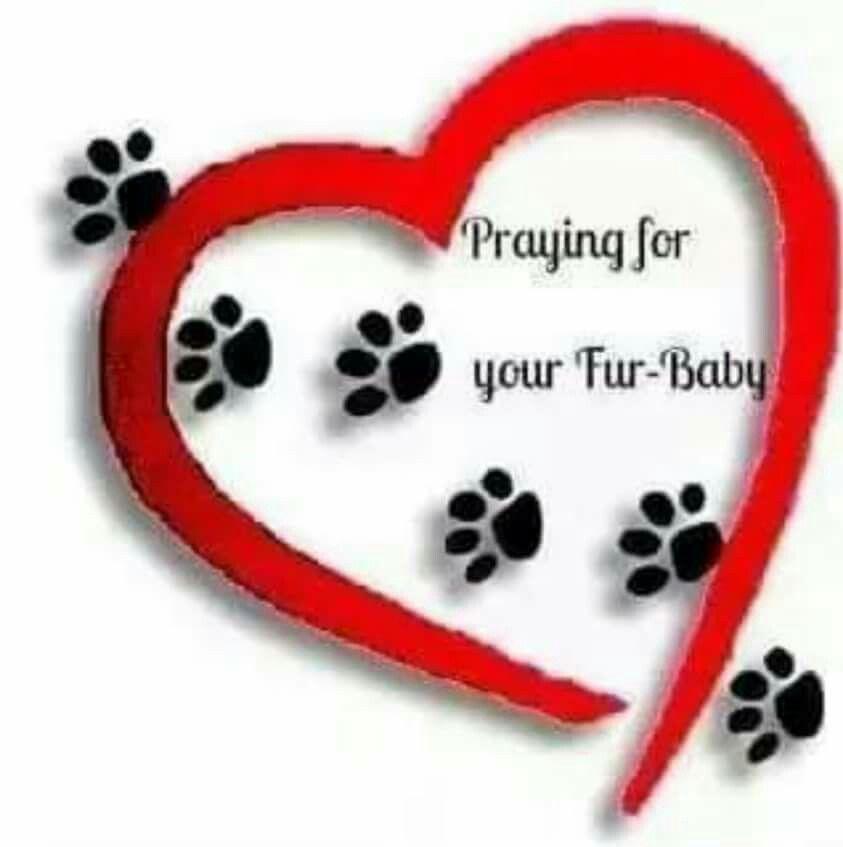 Praying For Your Fur Baby Sick Pets Prayer For Sick Dog Fur Babies