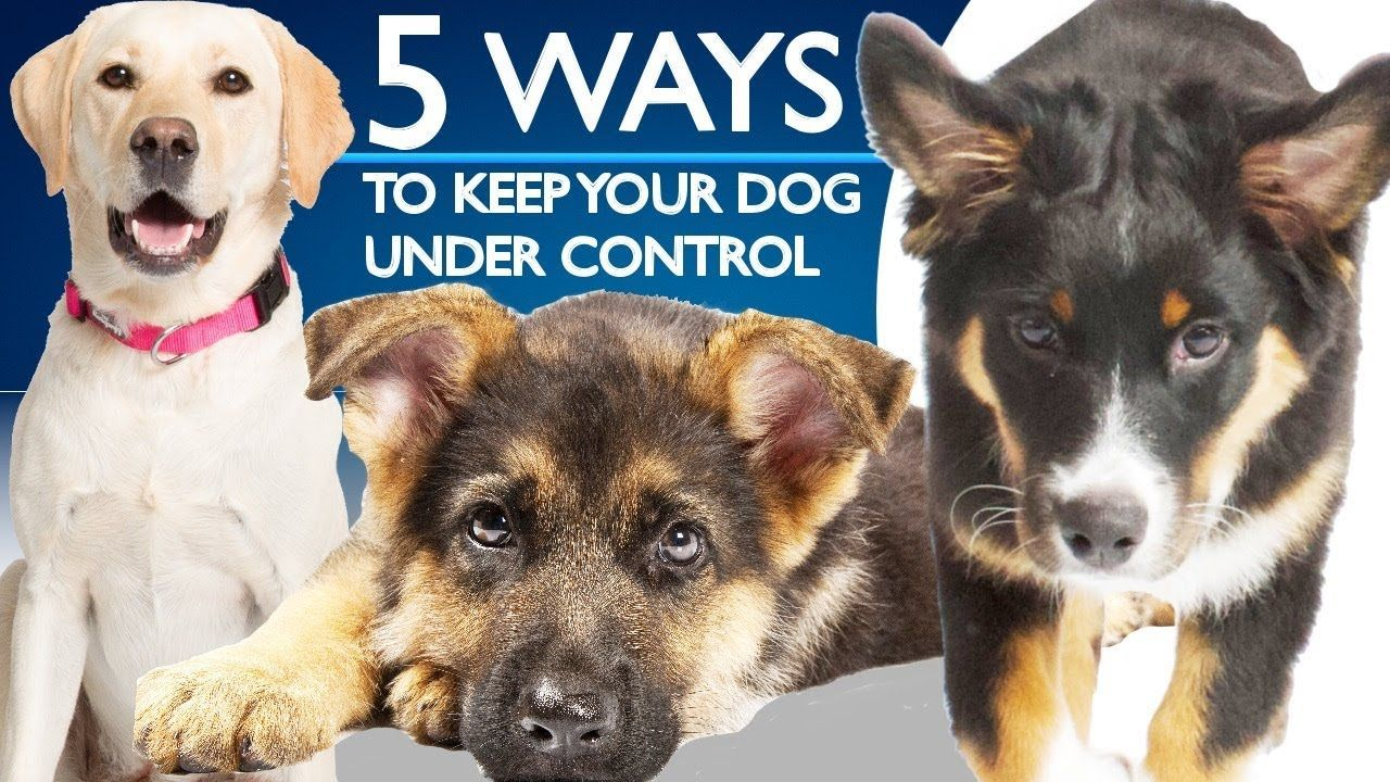 5 Ways To Keep Your Dog Under Control Youtube Dogs Animals