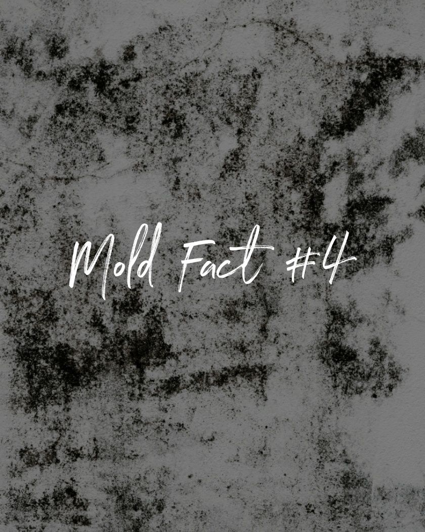 Mold fact 4 in 2020 Mold remediation, Types of mold