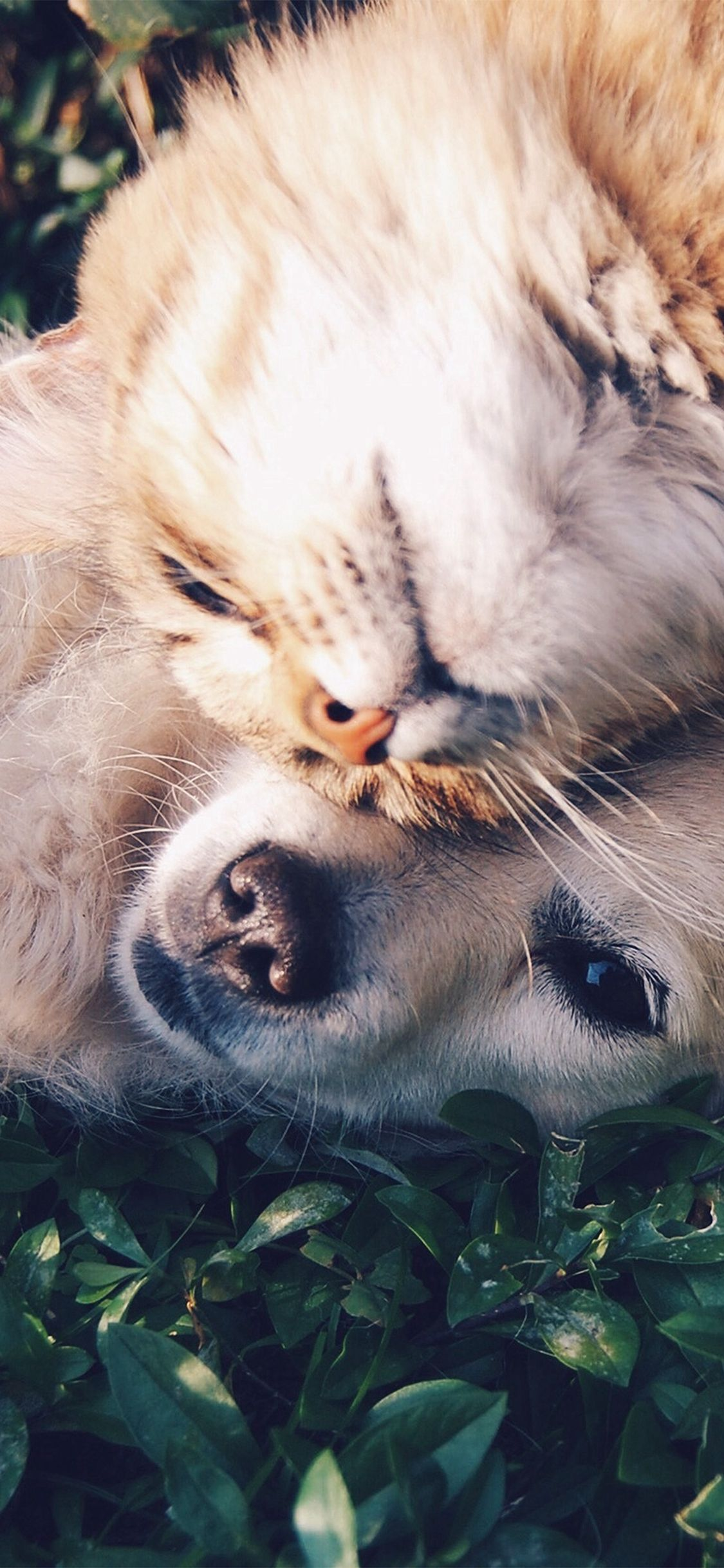 Cat And Dog Animal Love Nature Pure Iphone X Wallpaper Iphone X