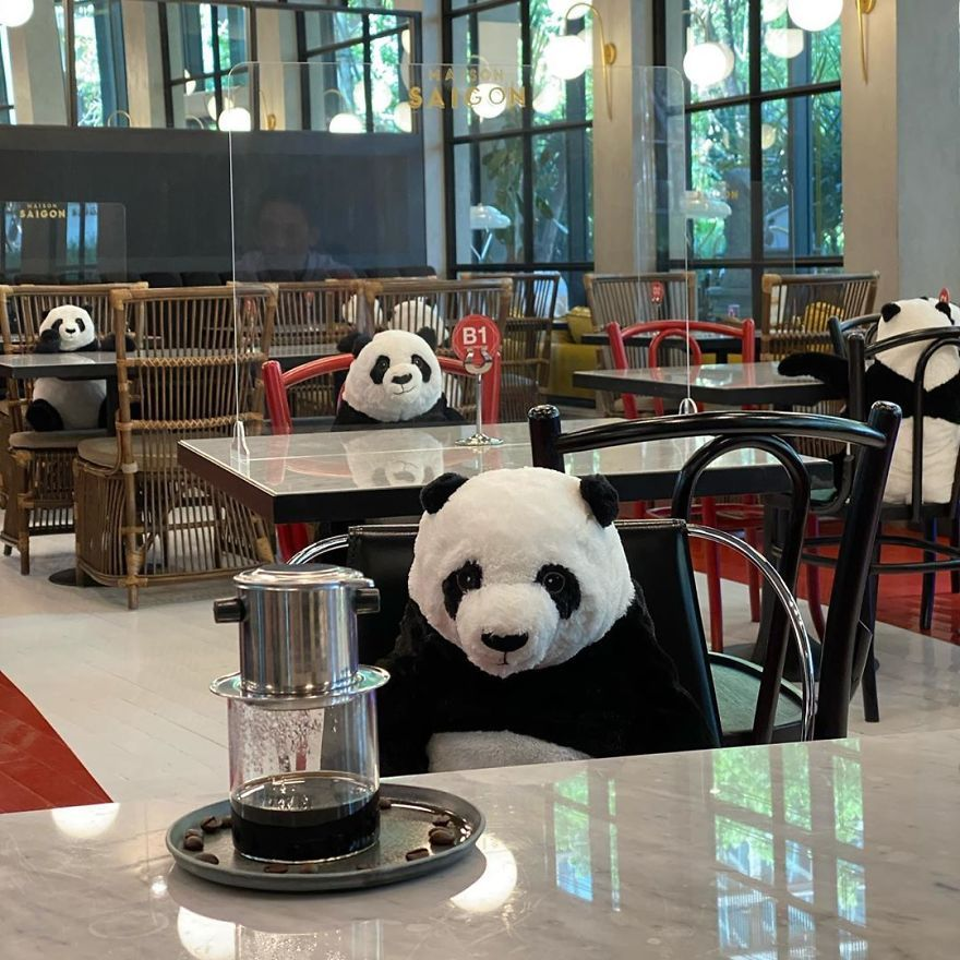 Restaurant Finds A Genius Way To Help Their Customers Feel Less Lonely While Social Distancing Using Pandas 10 Pics In 2021 Panda Cute Cats And Dogs Baby Panda Bears