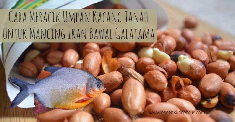 Pin Di Aquatic Essen