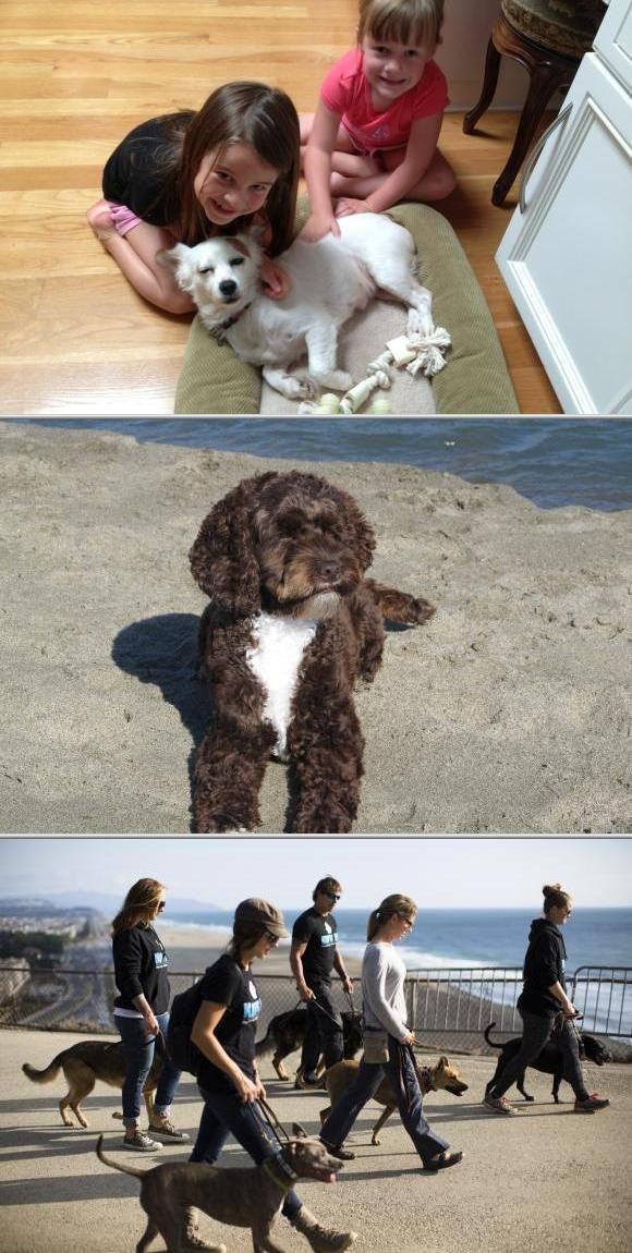 Koru K9 Dog Training And Rehabilitation Is A Reliable Company That