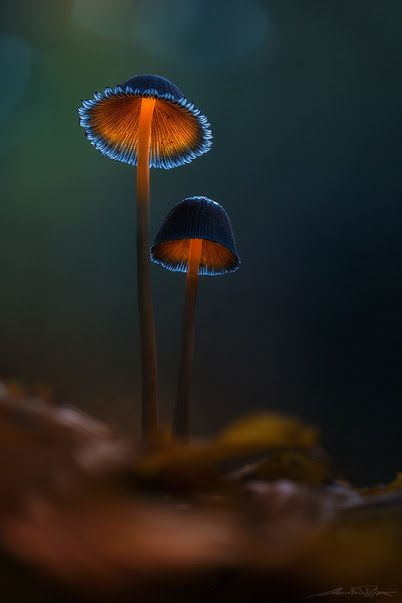 I Have No Idea What Kind Of Mushroom This Is But With The Lighting The Picture Is Just Amazing By Brent Csutoras