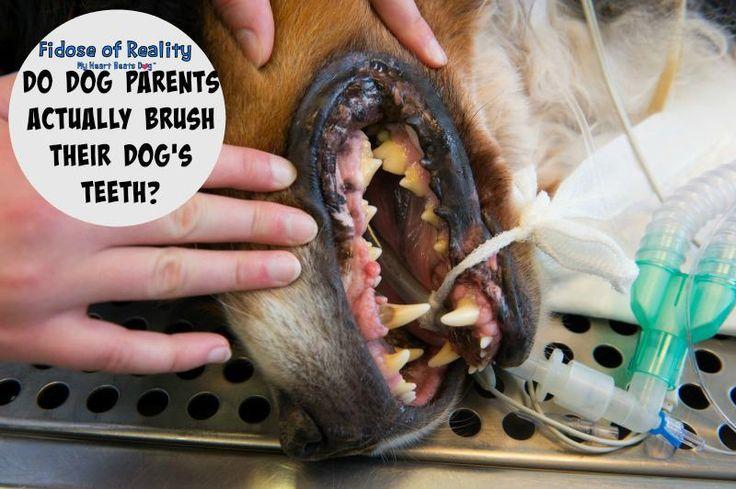Dog moms fess up about dog dental care dogdentalhealth