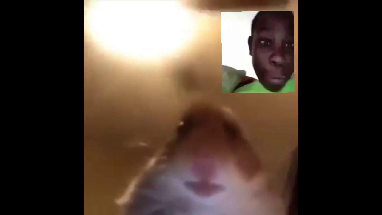 [Meme] hamster facetime.mp4... Get More gifs funny
