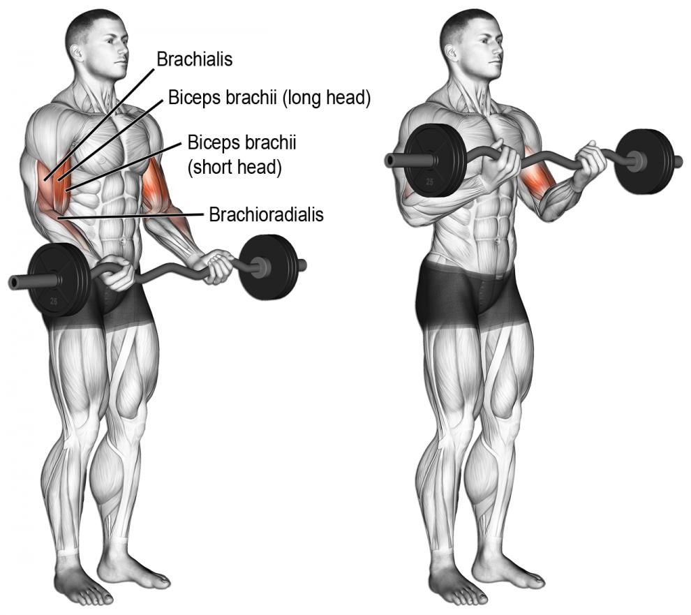 Comment Effectuer Le Curl Barre Ez Biceps Musculation Exercice Biceps Exercice Musculation