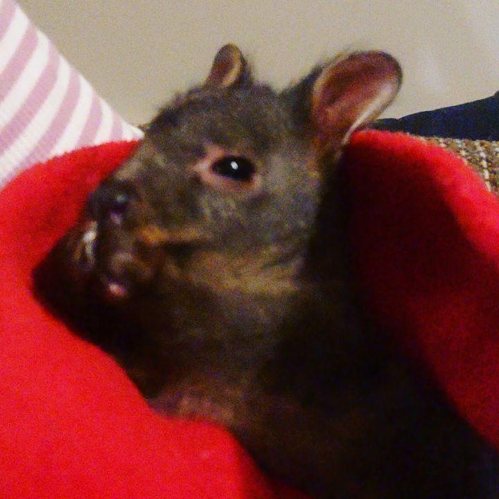 Nothing like a good bath after a big day ❤️  bathtime  keepingclean  cleanasfuck  babyanimals  toocute  wallaby  😍  tasmaniagram  tasmania  orphanedanimals  wildlifewarrior  wildlife  animalrescue  animallover
