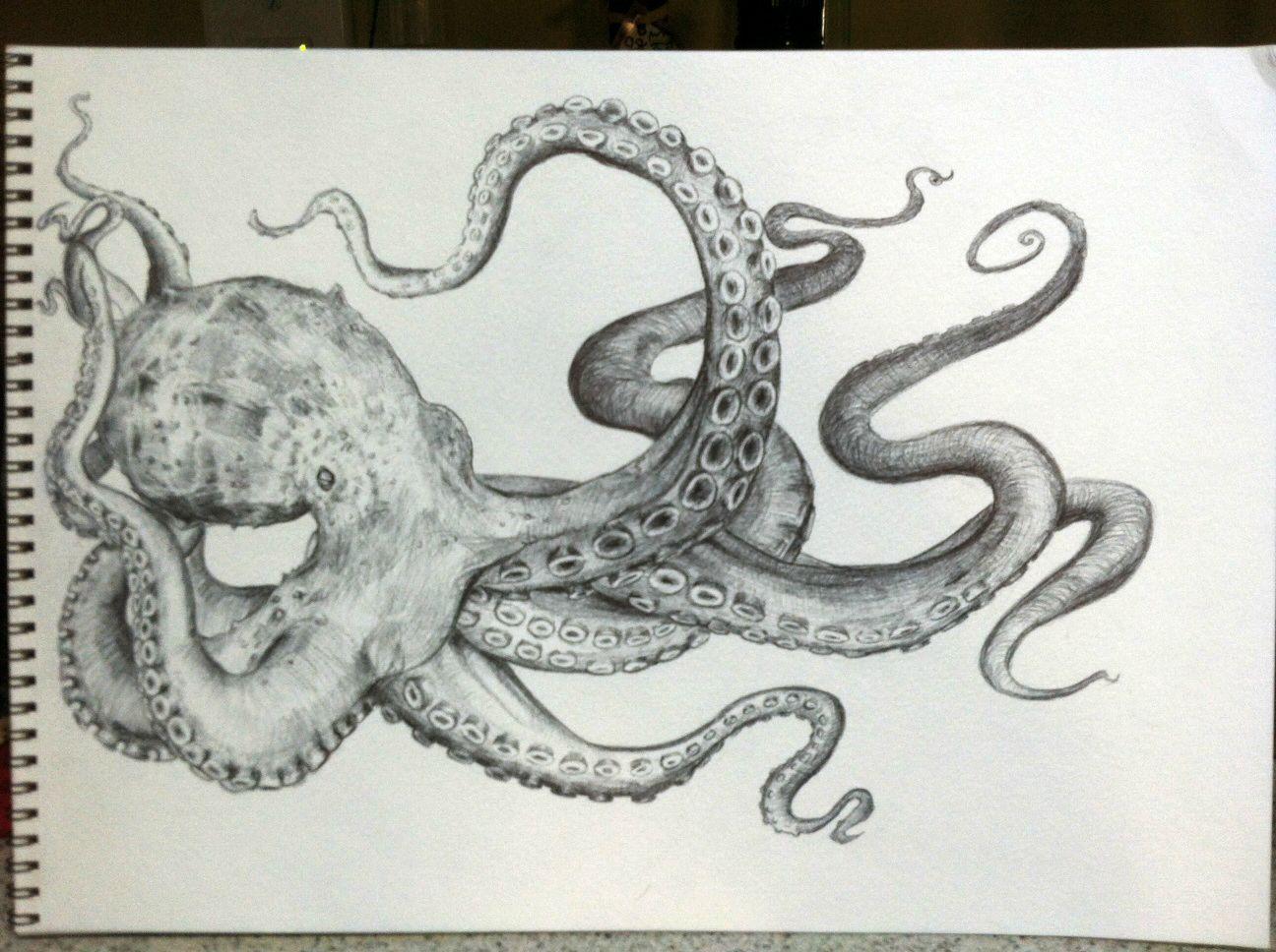 Octopus Drawing Tattoos Pinterest Octopus Drawing Octopus