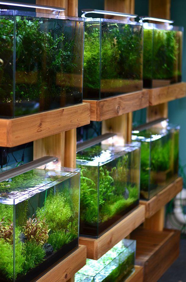 50 Stunning Aquascape Design Ideas Aquarium Shop Tropical Fish Aquarium Nature Aquarium