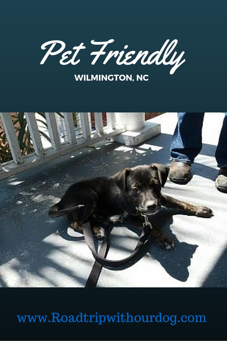 North Carolina Dog Friends Dogs Road Trip Usa