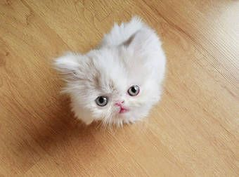 You Need This Ridiculously Precious Cat In Your Life. Trust Me.