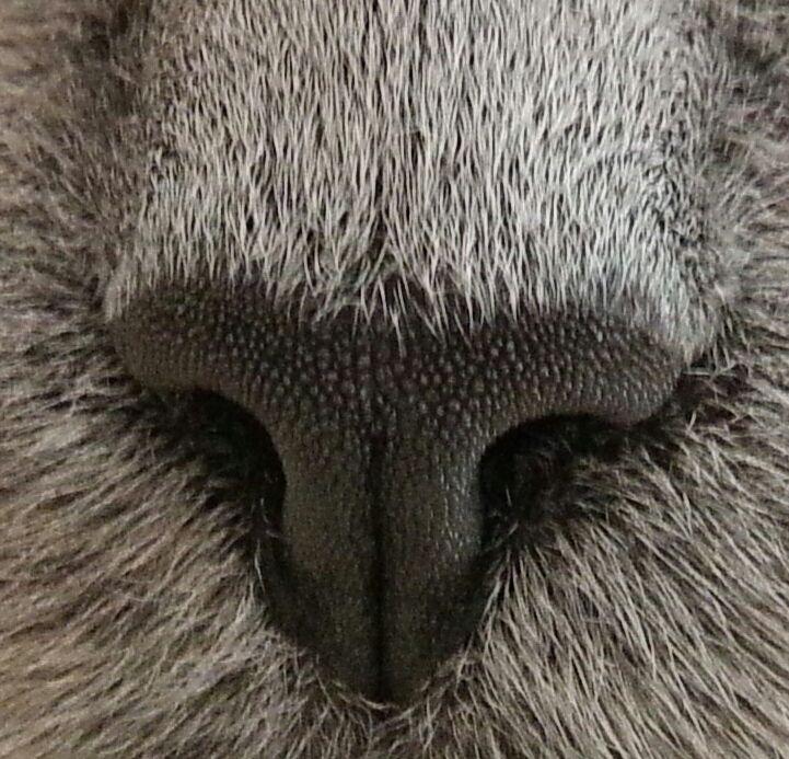 Teddys nose