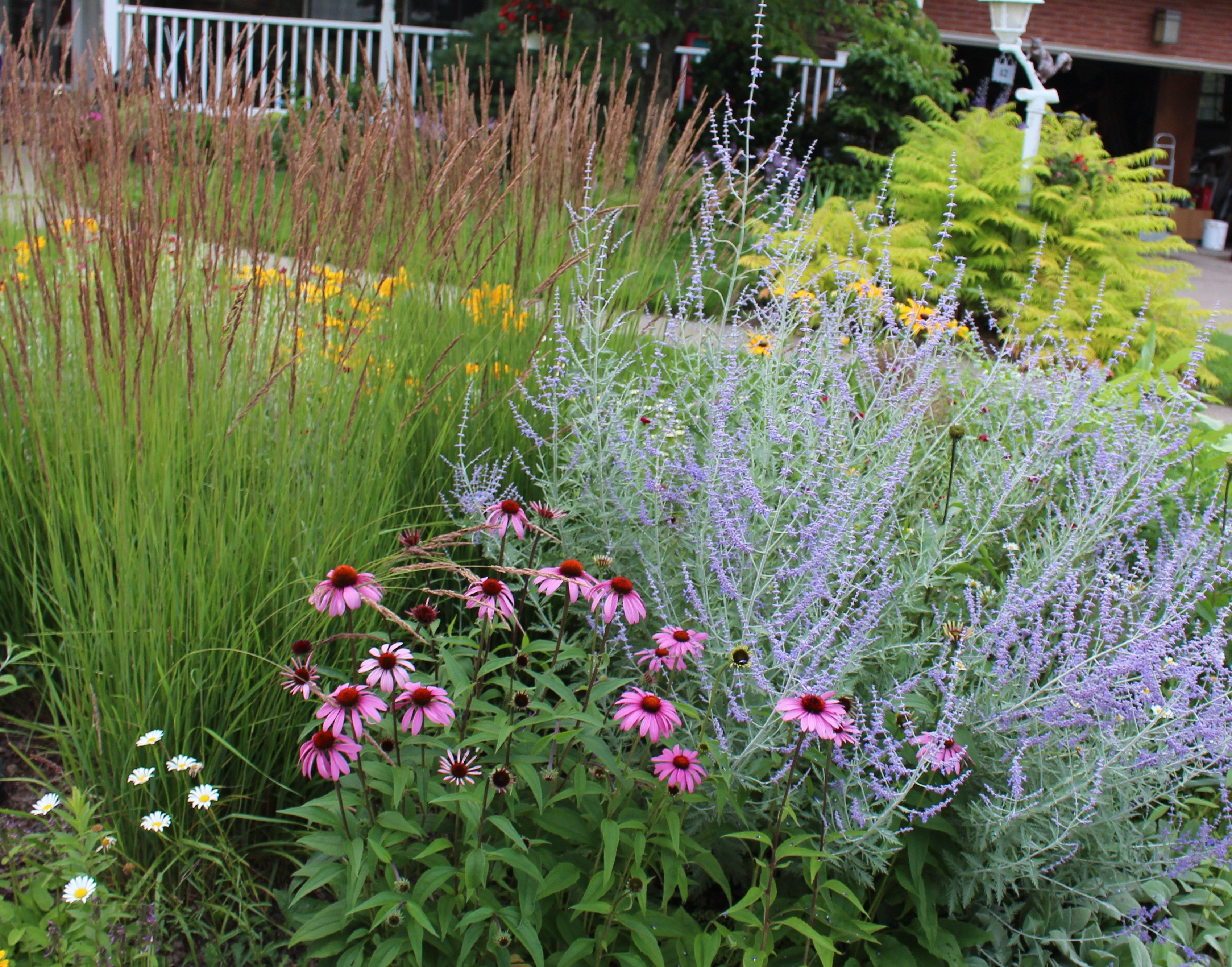 Perennial border sorta like suburbia gardens for the for Border grasses for landscaping