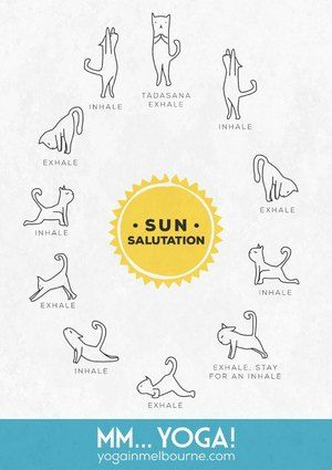What Every Yogi Should Know About Plank Pose — mm...Yoga!