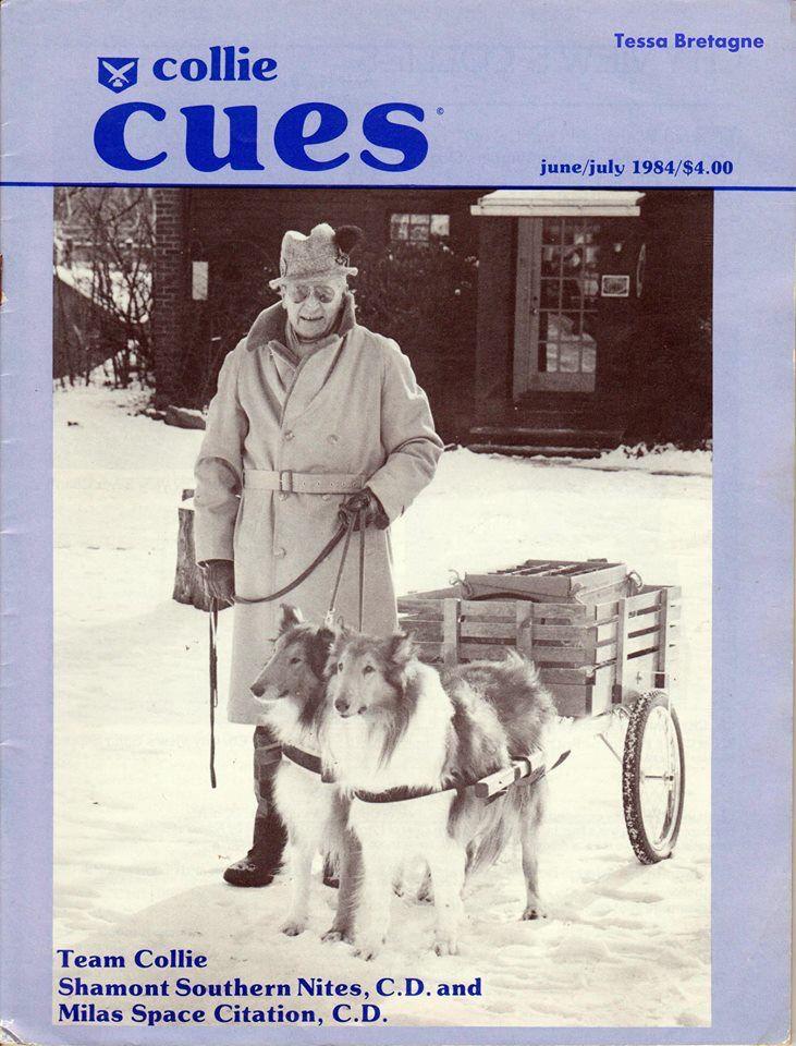 Collies And Cart Co Collie Rough English Shepherd Australian Welsh