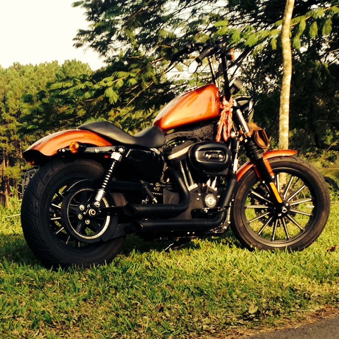 Harley Davidson Sportster 883 Iron Candy Orange Harley Davidson Harley Harley Davidson Sportster 883