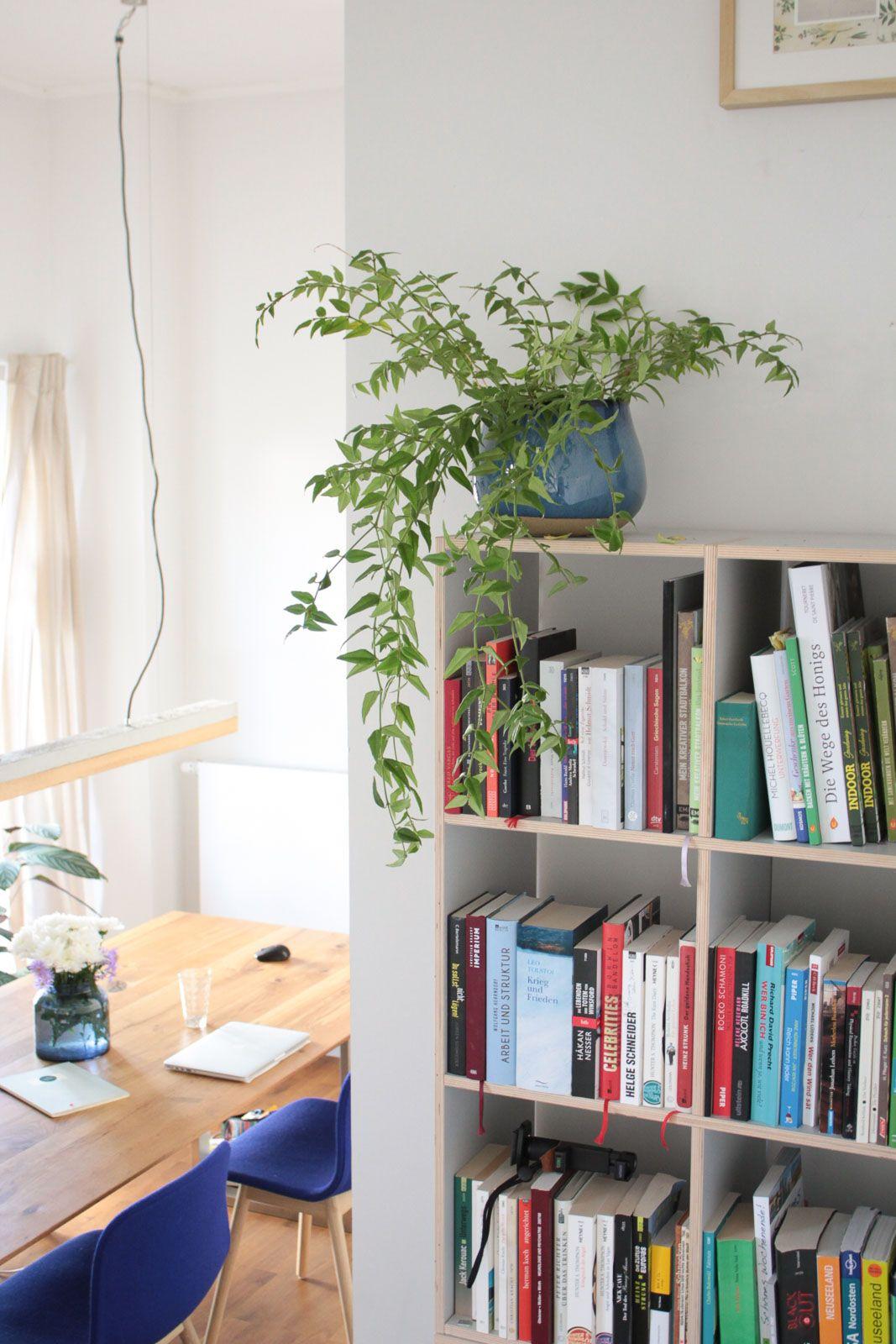 Zimmerpflanzen Fraulein Teil 1 Der Wohnzimmer Dschungel Garten