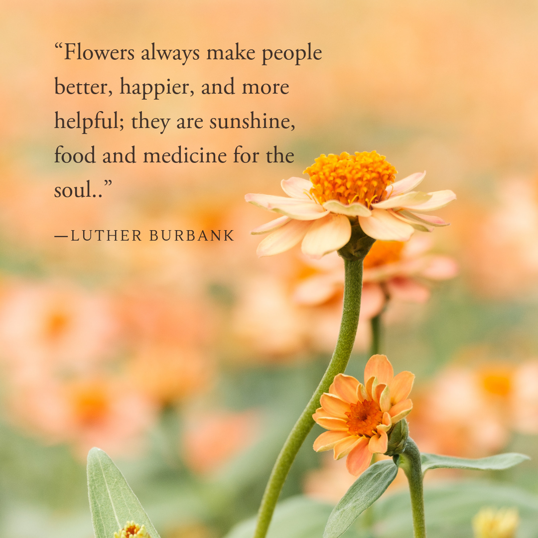 Nature Quote #botanical #herbalism #herbs #inspiration #botany