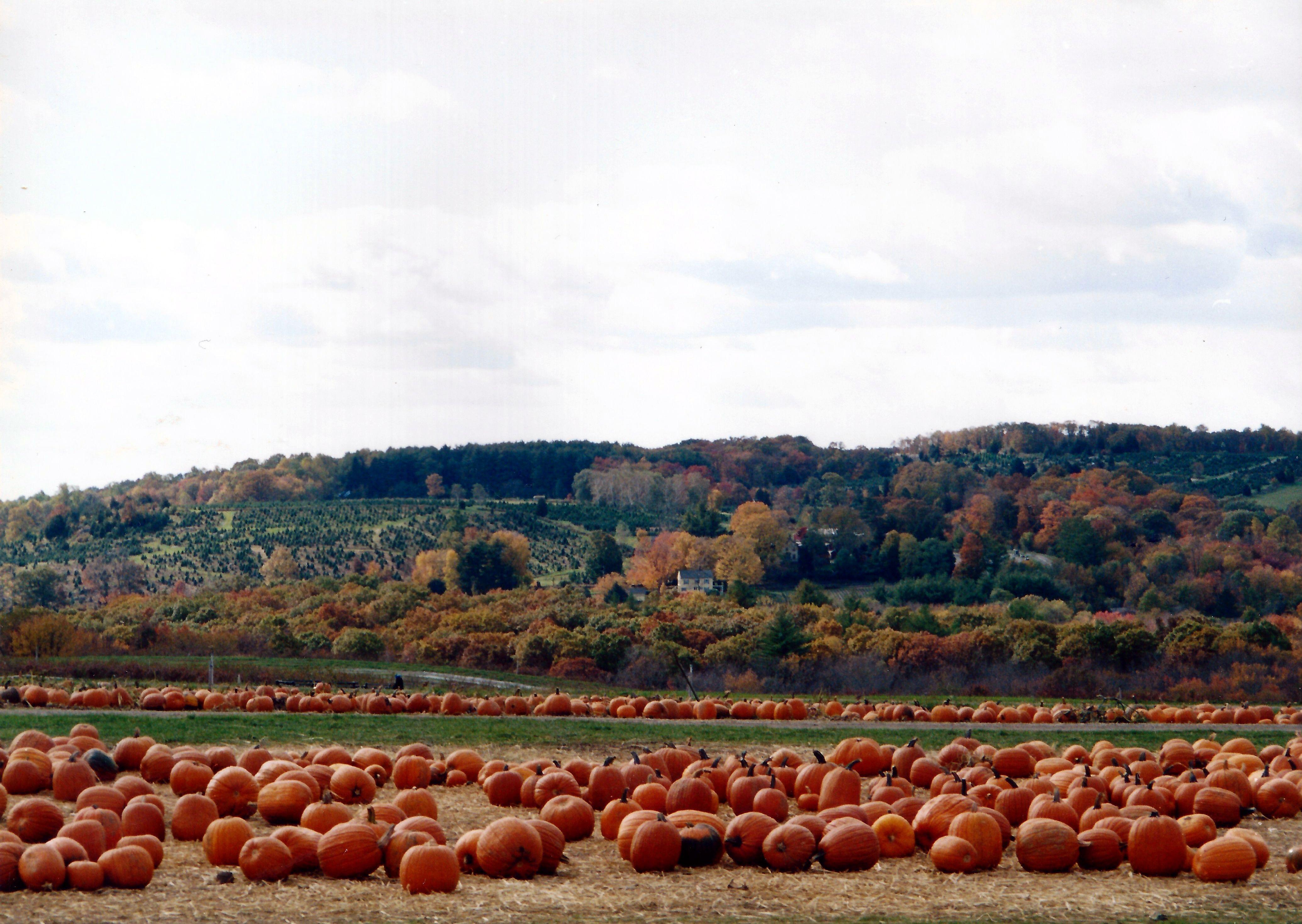Jones Family Farm In Shelton Connecticut I Miss Going There To Get Pumpkins Jones Family Family Farm Pumpkin