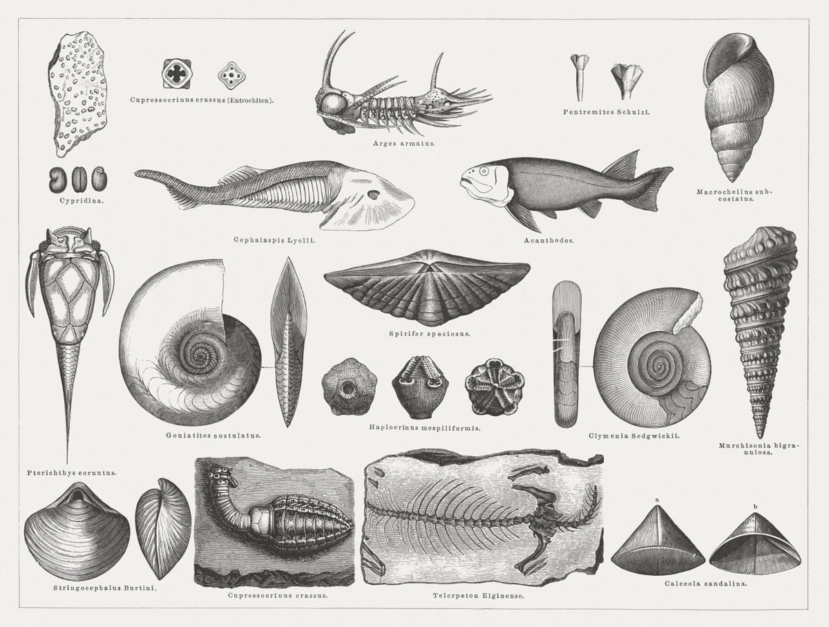 The Actual Meaning of Index Fossils Explained With
