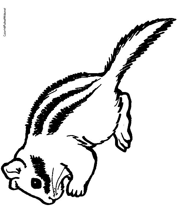 Cute Chipmunk Coloring Pages | gift ideas | Pinterest | Chipmunks