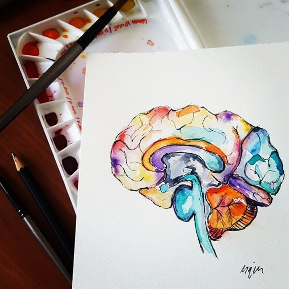 Watercolour Anatomy Art Brain By Almostanatomical On Etsy Brain