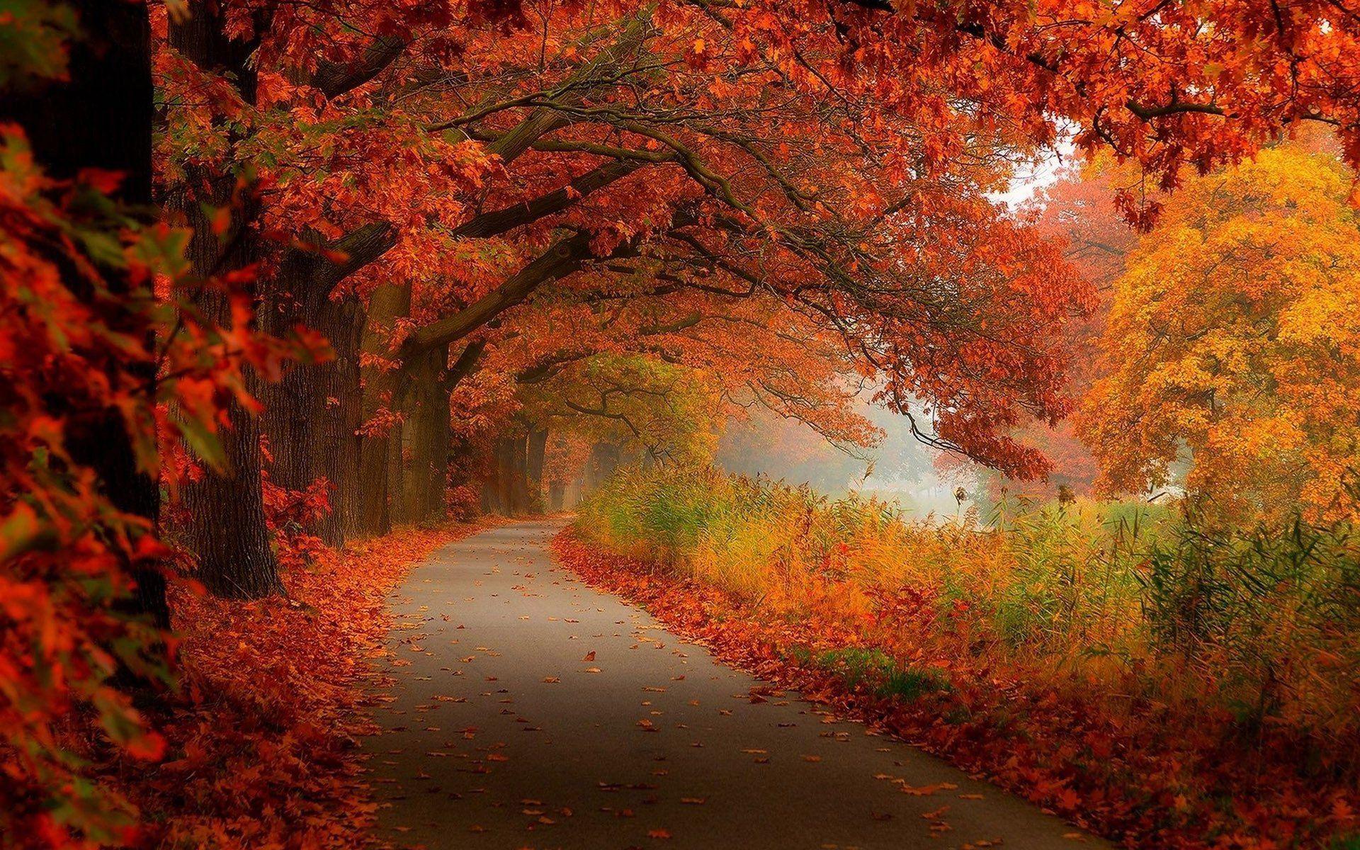 fall scenery photo hd