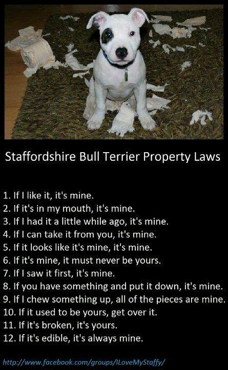 Staffy Property Laws Sounds Familiar Lol Staffy Dog Bull