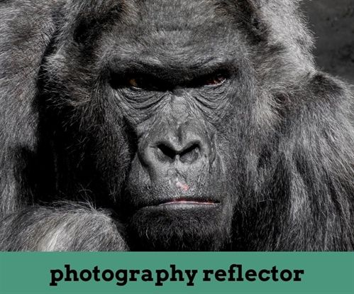 Photography Reflector 31 20181027204205 46 Photography Degree