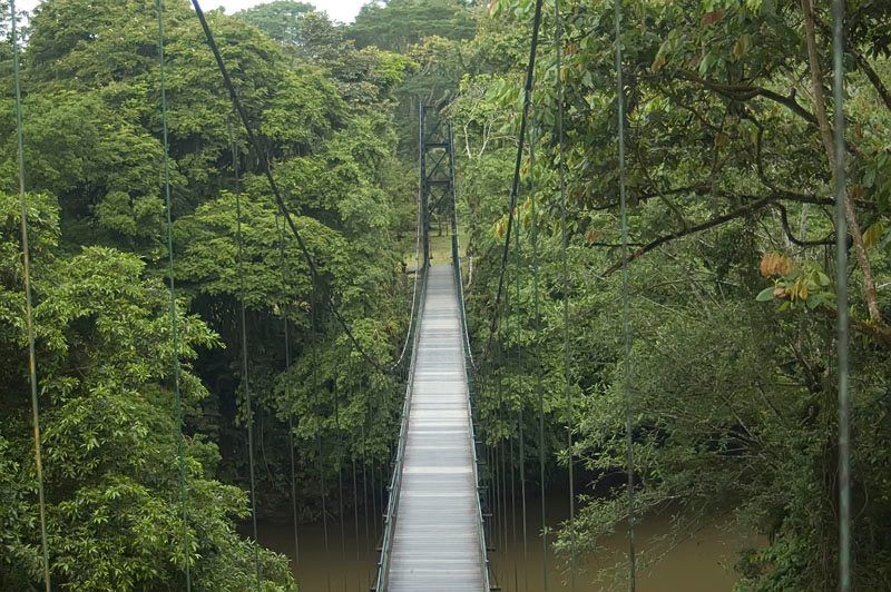La Selva Biological Research Station Costa Rica Costa Rica Travel Places To Go Places To Visit