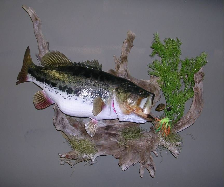 My kind of mount just a little fish on the walls for Bass fish for sale