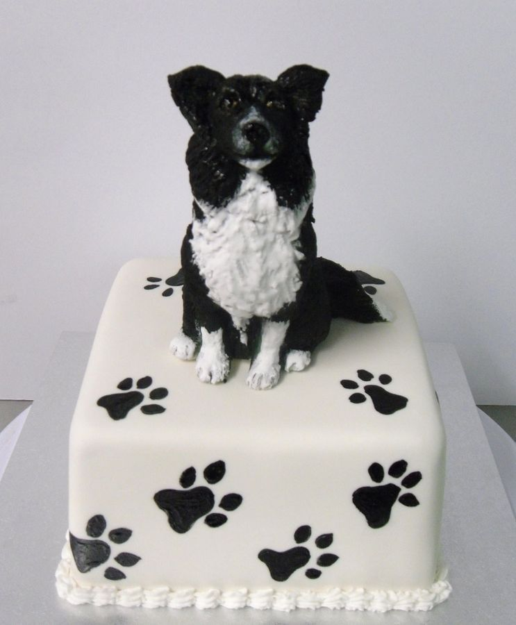 Border Collie Cake Yahoo Image Search Results In 2019