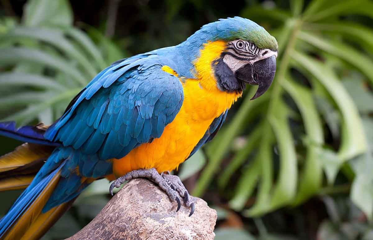 Tropical Birds Names List Learn About Different Species