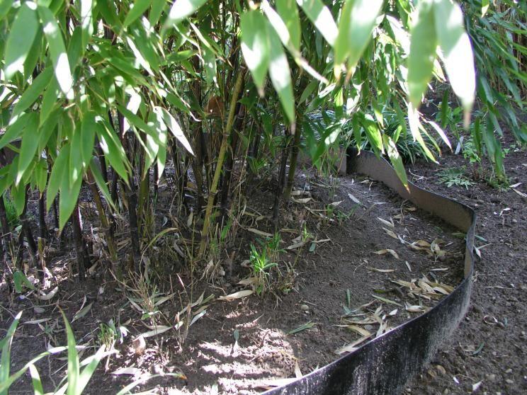Bambus Sichtschutz garten bambus, Garten pflanzen und