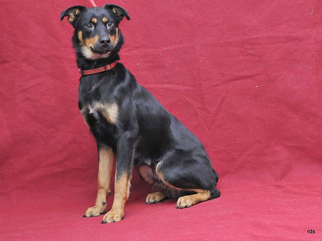 I'm Joon.  My best friend is Benny.  We need to be adopted together.  I'm a little over a year old.   Please visit me at the Burbank Animal Shelter.