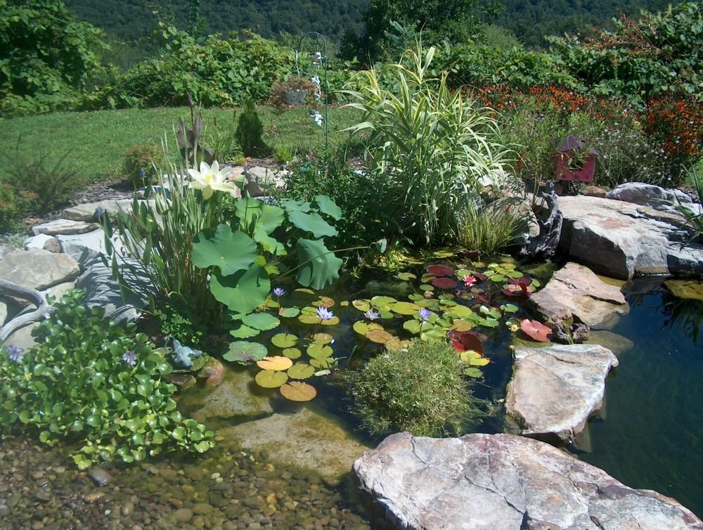 Bog filter backyard ideas pinterest diy pond fish for Homemade pond ideas