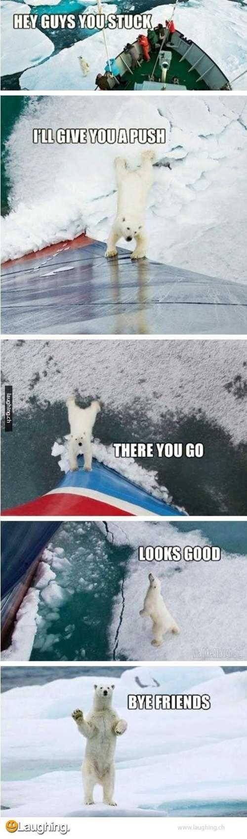 The full story behind the good guy polar bear