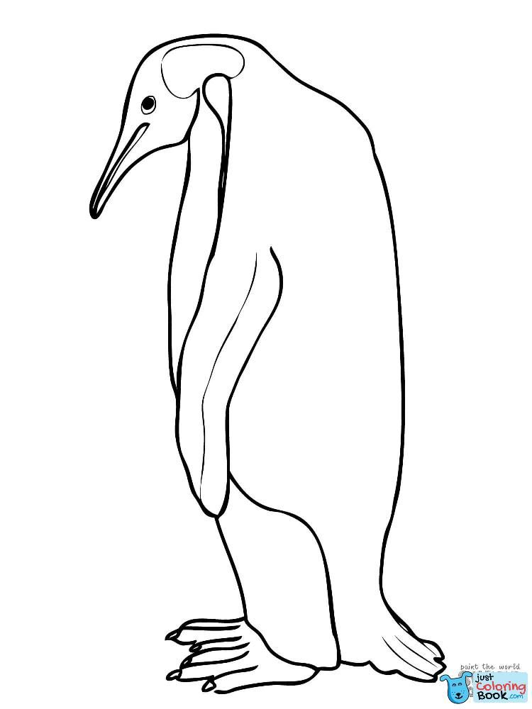 Printable King Penguin From Falkland Islands Coloring Pages